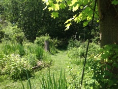 Young Food Forest Garden, both productive and beautiful.
