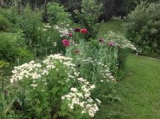 Flowers in a forest garden