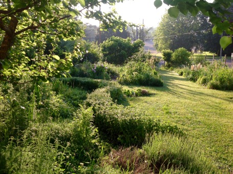 Fruit tree guilds with oregano borders